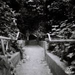 35mm - 120mm film - photography - black and white - stairway - beach - vancovuer
