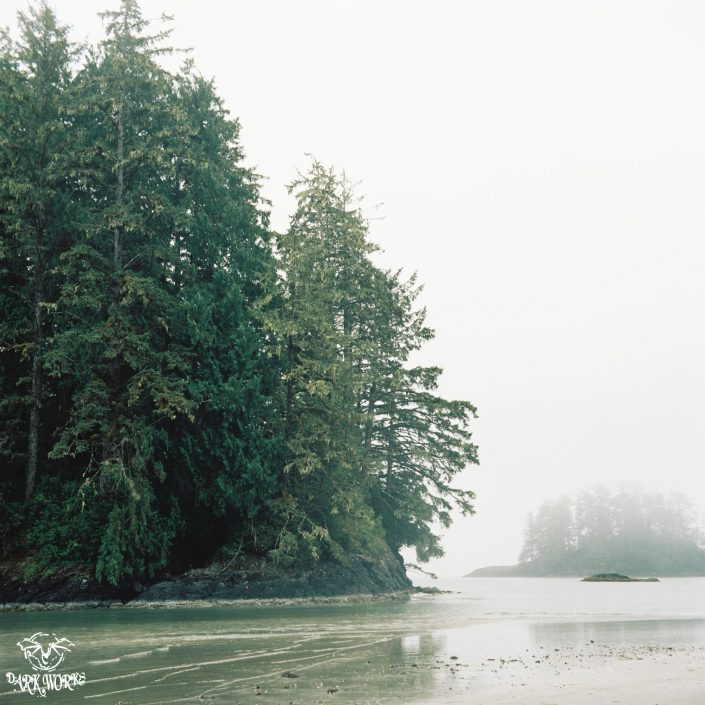 35mm - 120mm film - tofino - bc - photography - ocean - waves - fog - trees - island